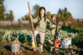 Fotografie die Ernte der Kartoffeln