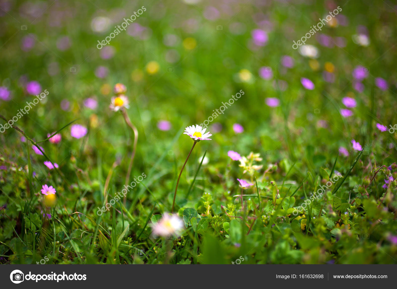 Bee on countryside flowers– stock image