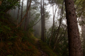 Mist in the Slovenian forest at early morning