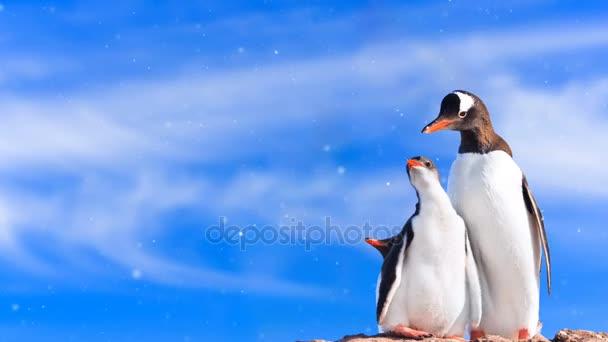 Antarktiszi vadvilág: pingvin család