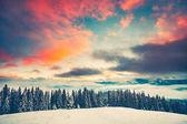 Fotografie Zimní slunce krajina s borového lesa