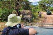 Fotografie Family of elephants in Lake Manyara National Park, Tanzania, Afr