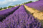 Venkovské krajiny Provence, Francie