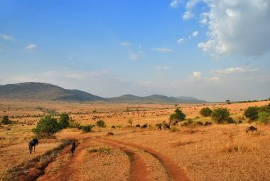 African road and antelopes gnu
