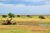 Lake Manyara Nemzeti Park Tanzánia
