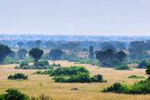 Photo Queen Elizabeth park, Uganda