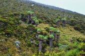 Fotografie Mt Kilimanjaro scenery, Tanzania, Africa