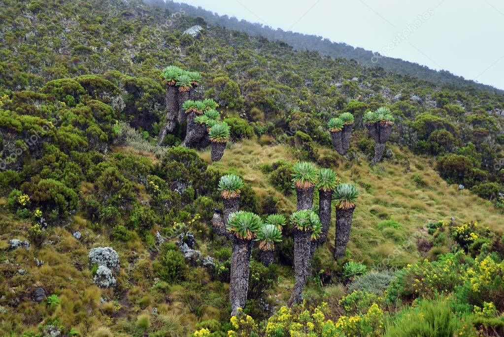 Mt Kilimanjaro scenery, Tanzania, Africa