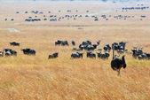 Fotografia Kenya, Masai Mara