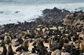 Fényképek Cape Medvefókák, Namíbia