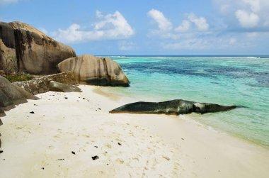 Tropical beach on Seychelles islands