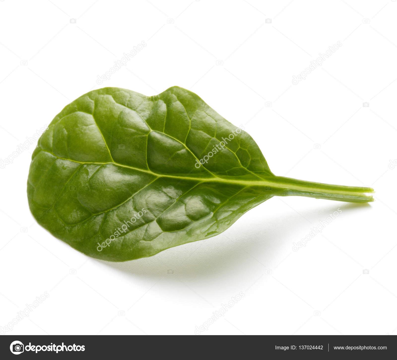 Fotos hojas de espinacas 6