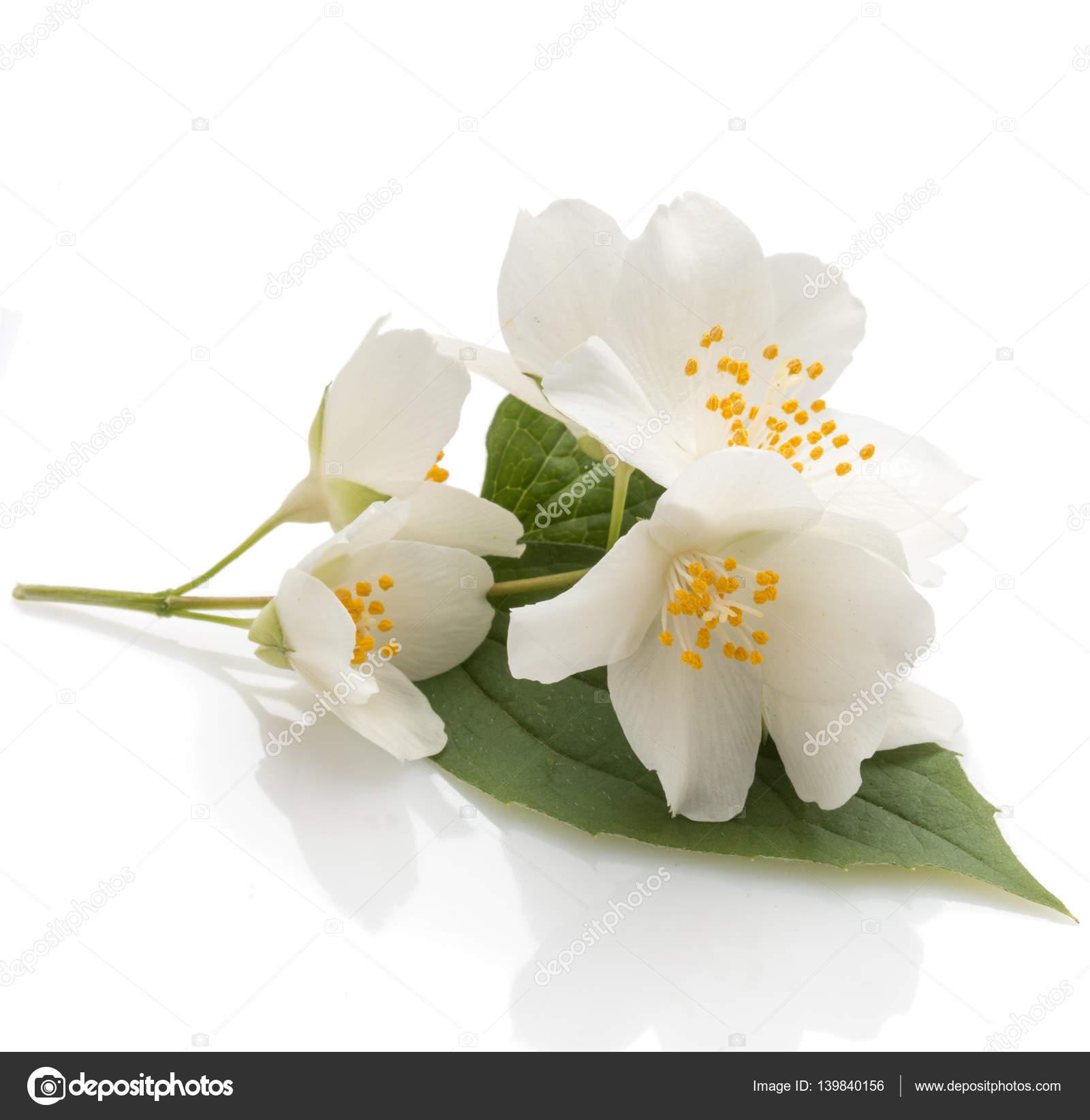 Bunch Of Fragrant Jasmine Flowers Stock Photo Natika 139840156