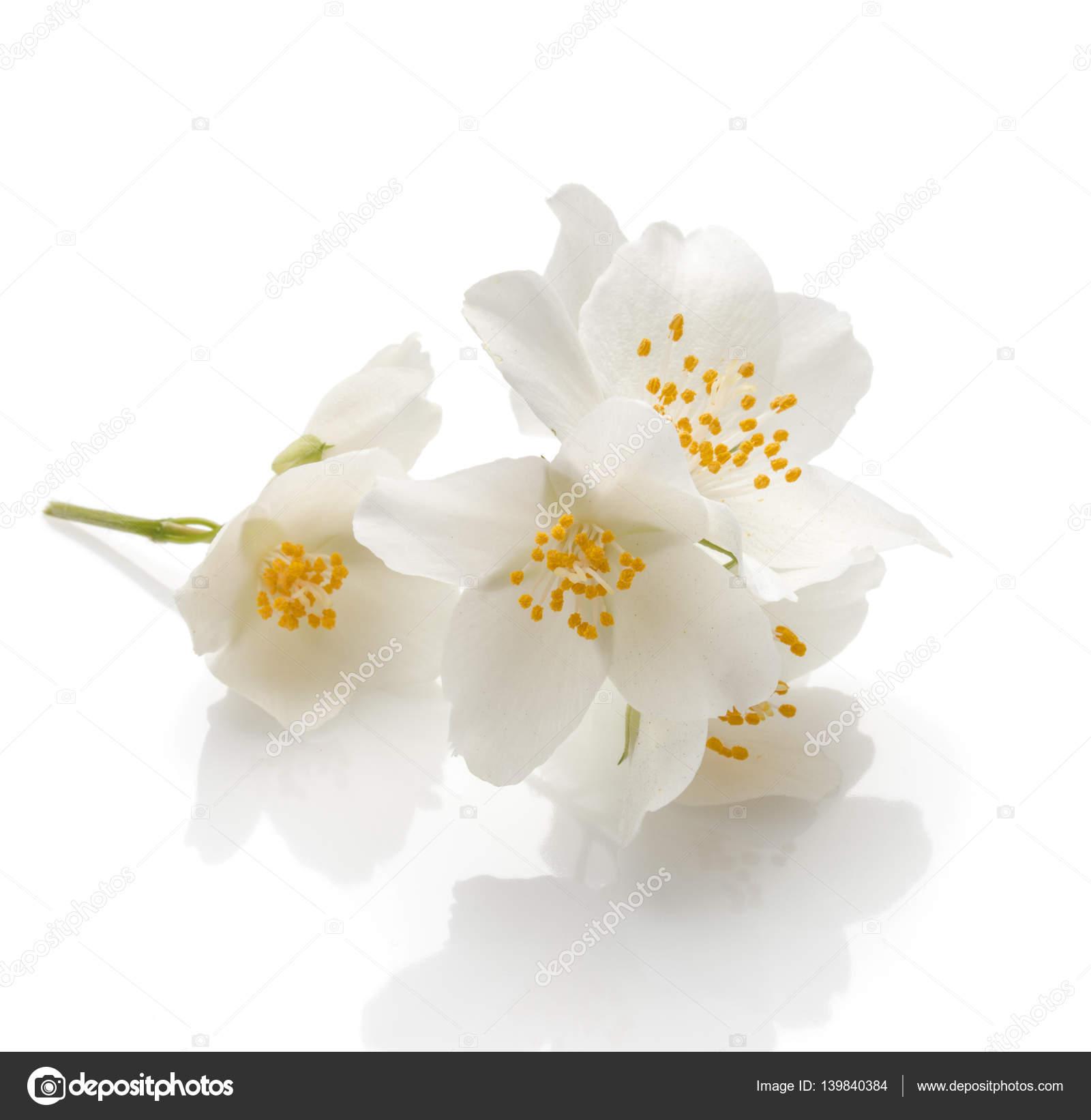 Bunch Of Fragrant Jasmine Flowers Stock Photo Natika 139840384