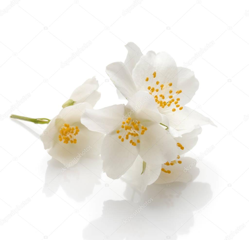 bunch of fragrant jasmine flowers