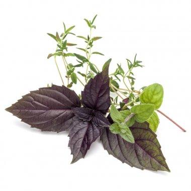 Fresh herb leaves variety