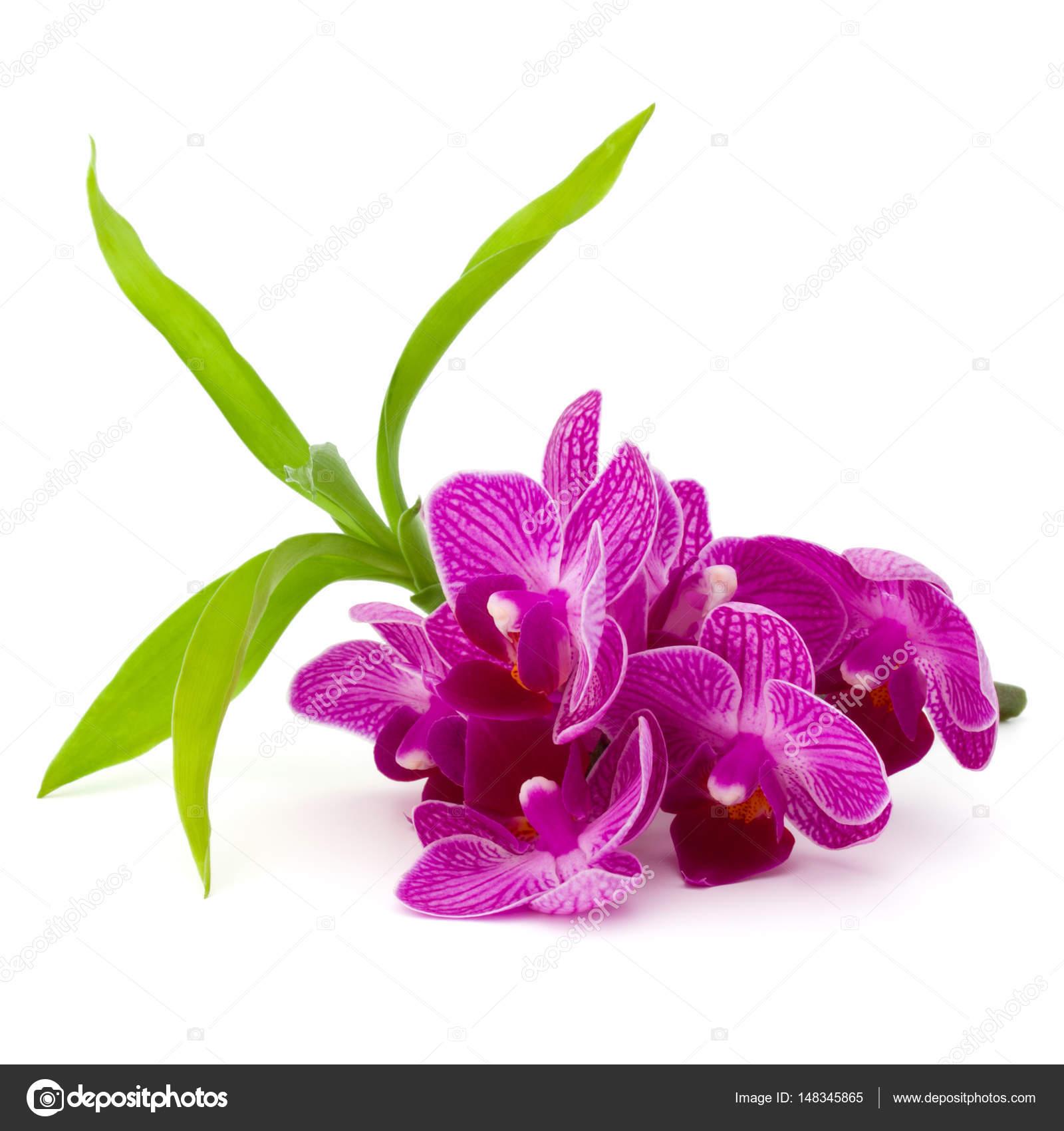 Orchid flowers bouquet stock photo natika 148345865 orchid flowers bouquet stock photo izmirmasajfo
