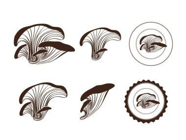 Maitake Mushroom Collection