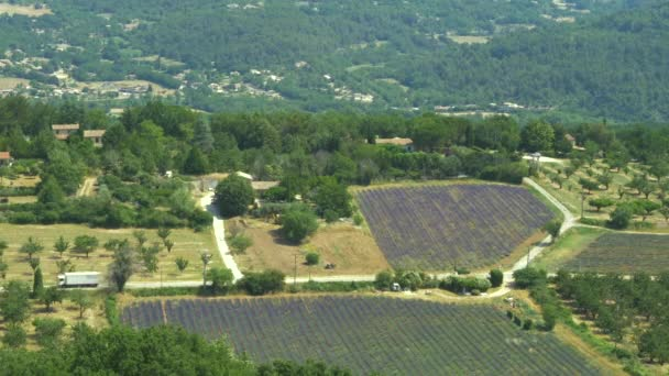 Lavender fields on the Plateau de Valensole, France.