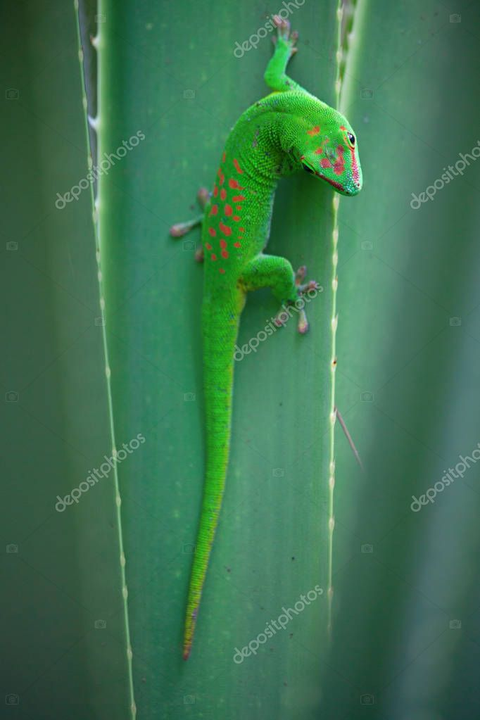 Green gecko on roof