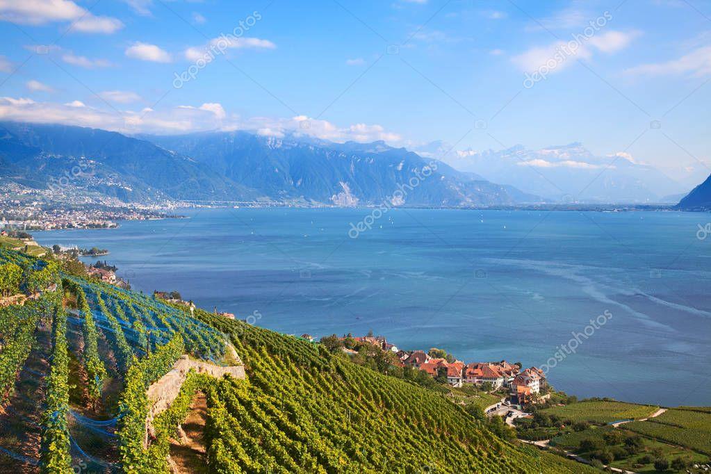 Vineyards of the Lavaux region