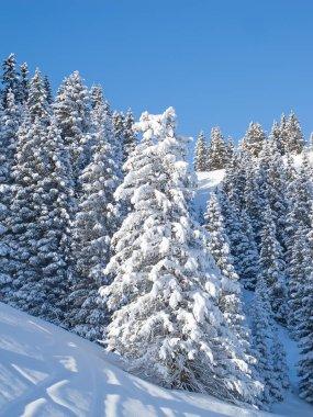 Winter in Swiss Alps