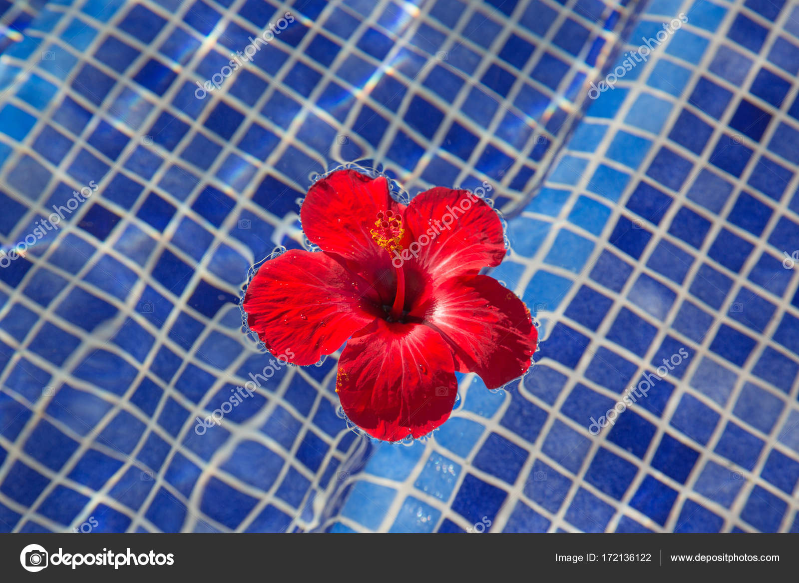 Tropical Hibiscus Flower In Water Stock Photo Swisshippo 172136122