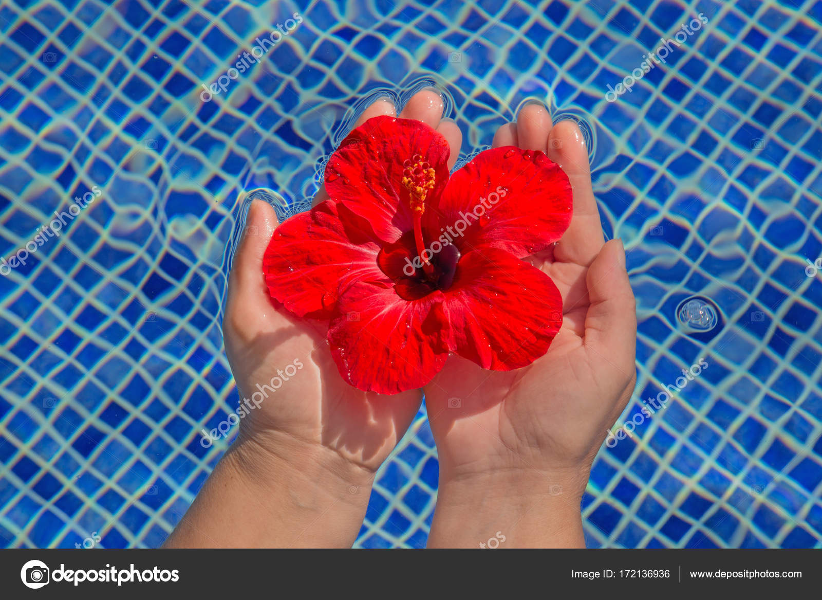 Tropical Hibiscus Flower In Water Stock Photo Swisshippo 172136936