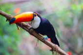 Photo Colorful tucan perched on tree branch