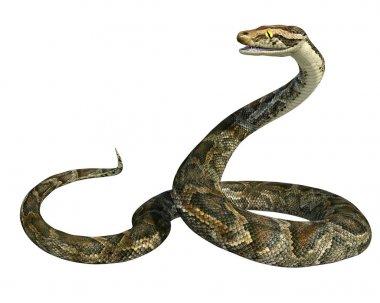 Golden giant python snake isolated on white. 3d render.