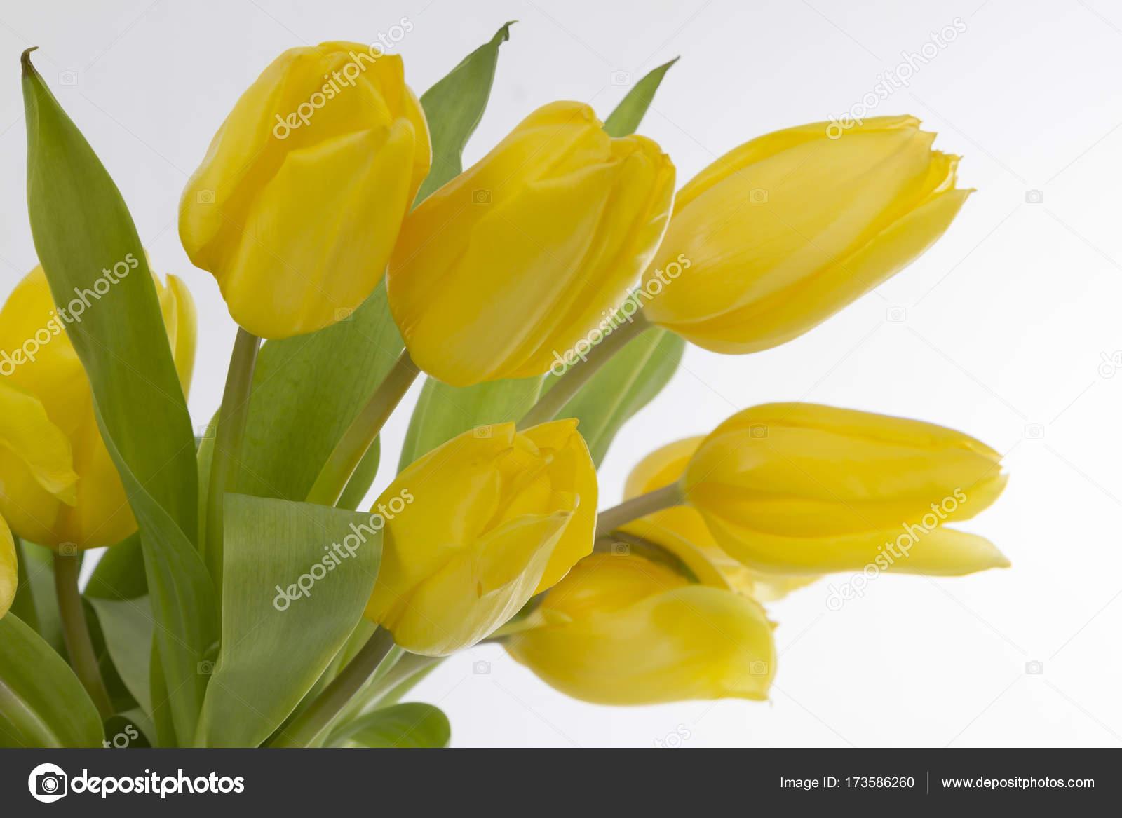 Flores Tulipanes Amarillos Fotos De Stock C Colour 173586260