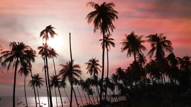 Silhouetten von Kokospalmen