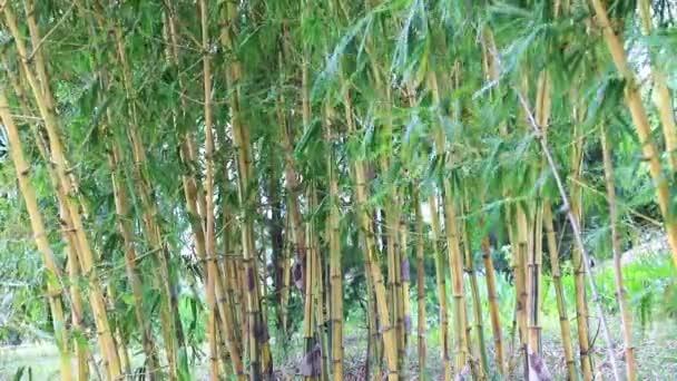 Bambusový háj a vánek