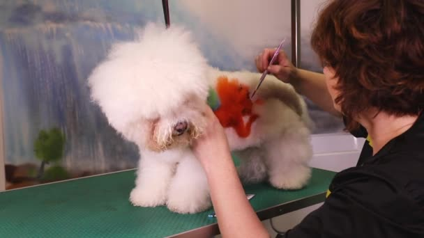 Groomer paints a dog