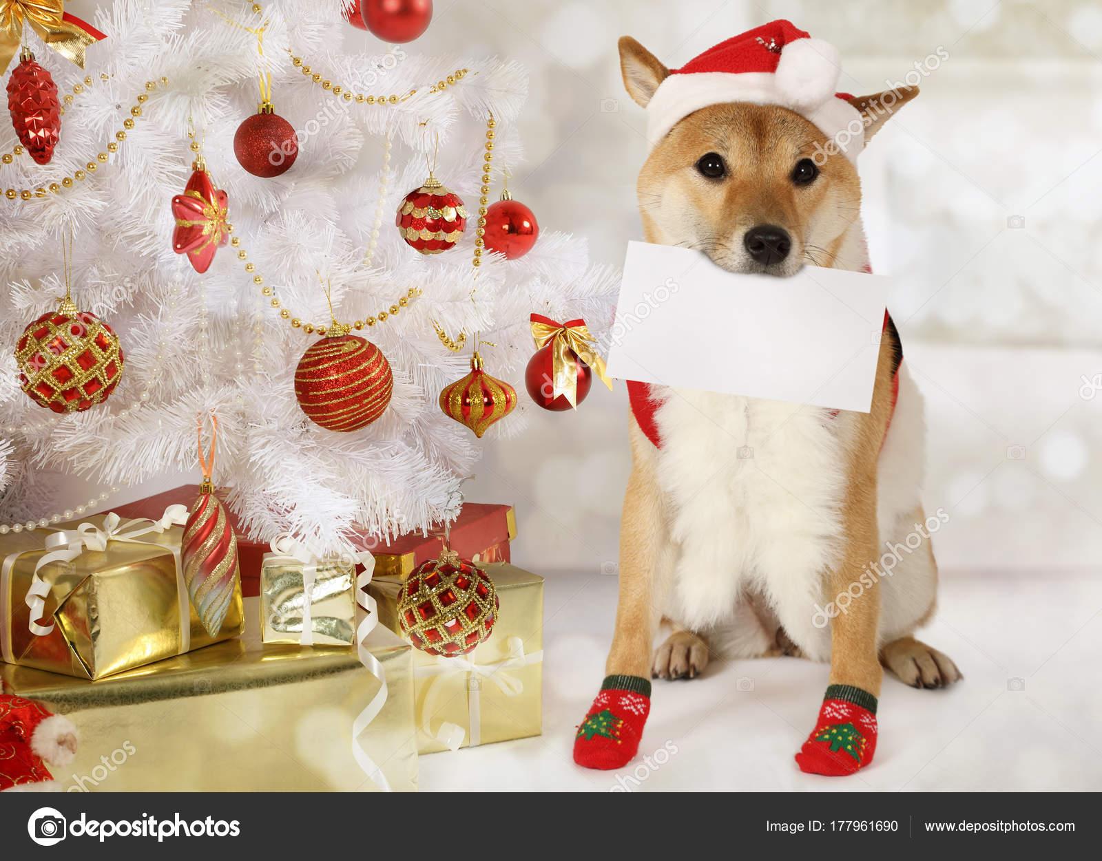 Japanische Shiba Inu Hund mit einer Grußkarte — Stockfoto ...