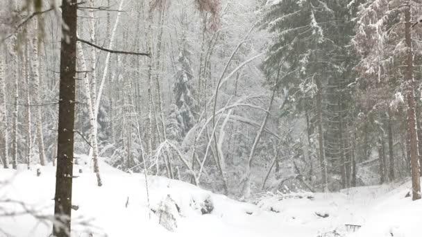 Sněžení v divoké zimním lese