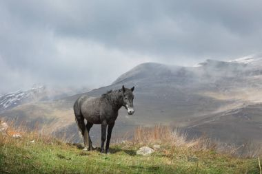 Black horse grazing in the highlands of North Ossetia.