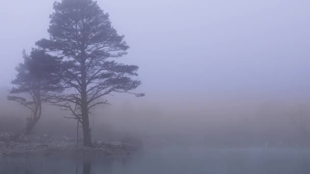 Landscape with forest lake and trees covered with thick fog