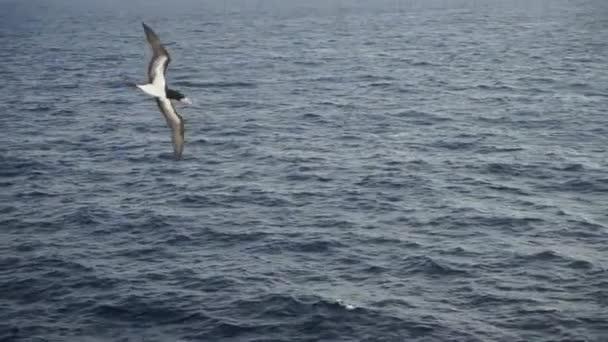 Nagyon közel. Egy nagy madár, Sulidae repül a tenger felett egy gyönyörű égbolton, hogy halat keressen.