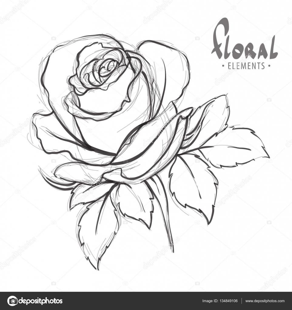 desenho de rosas vetor de stock chisnikov 134849106