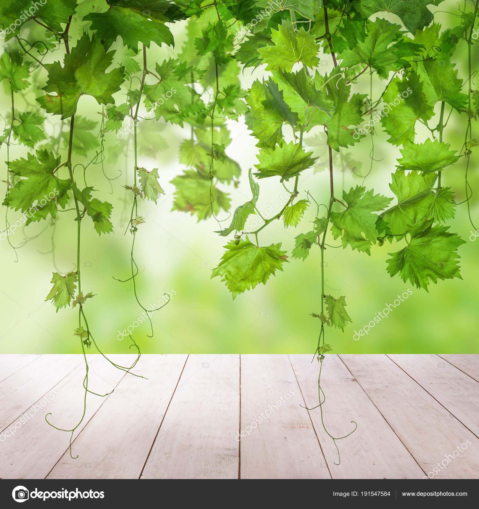 Green Background With Green Grape Leaves Grapevine Stock Photo Image By C Artmim 191547584