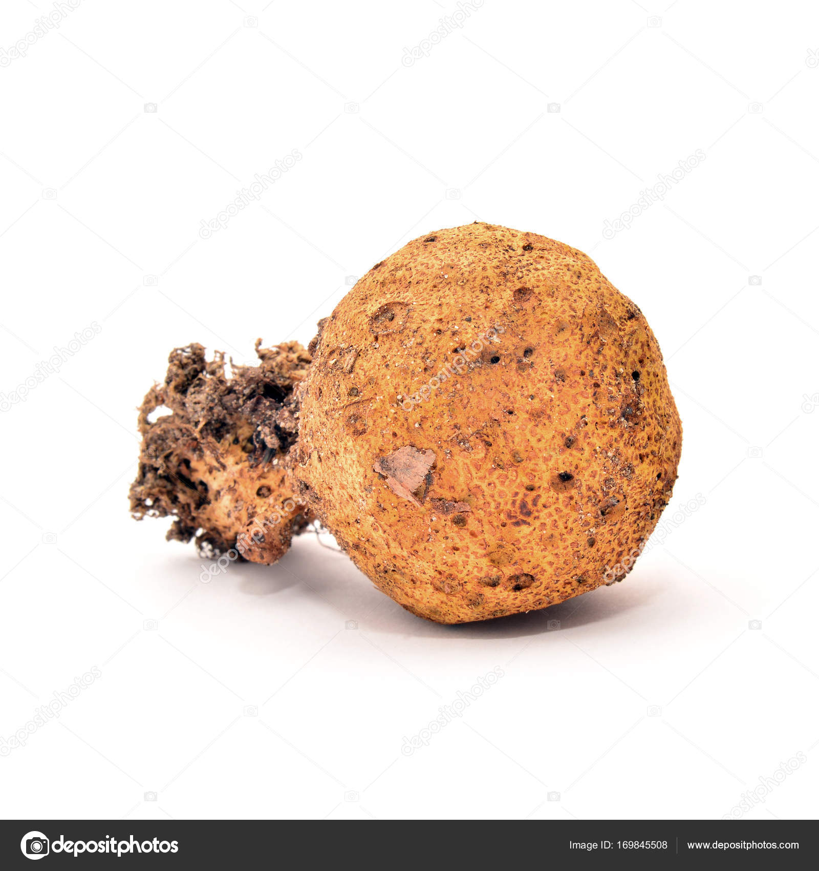 sclerodermie citrinum paddestoel — Stockfoto © ibogdan #169845508