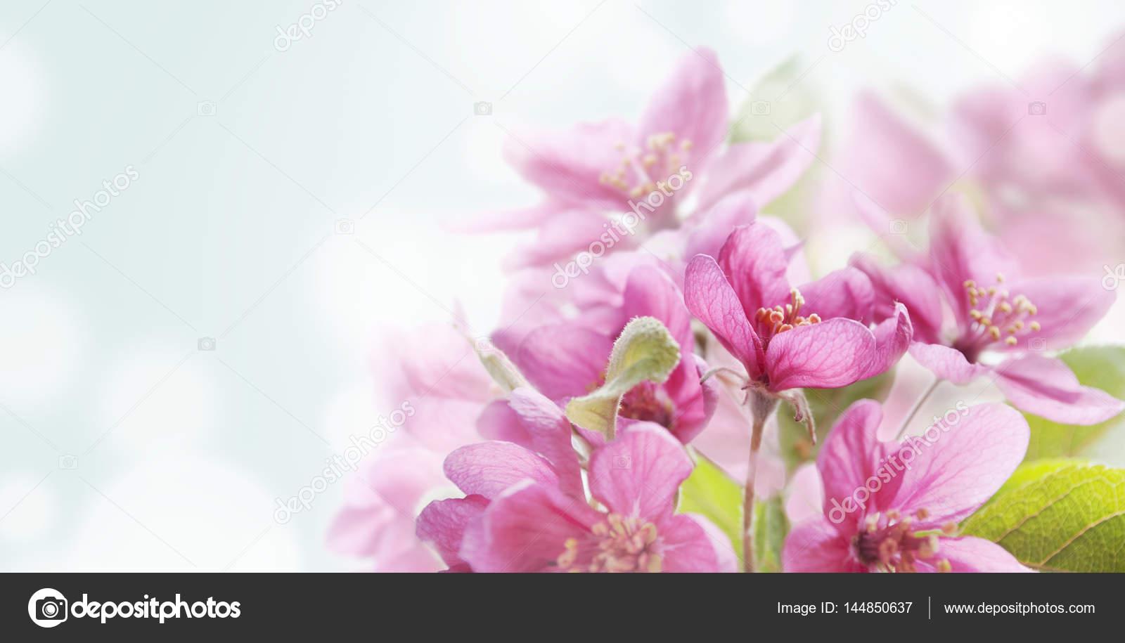 Carta Da Parati Fiori Di Ciliegio : Fiore di ciliegio in giardino giapponese u foto stock hitdelight