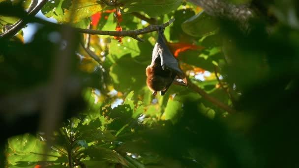 Fliegender Fuchs spült Baum an