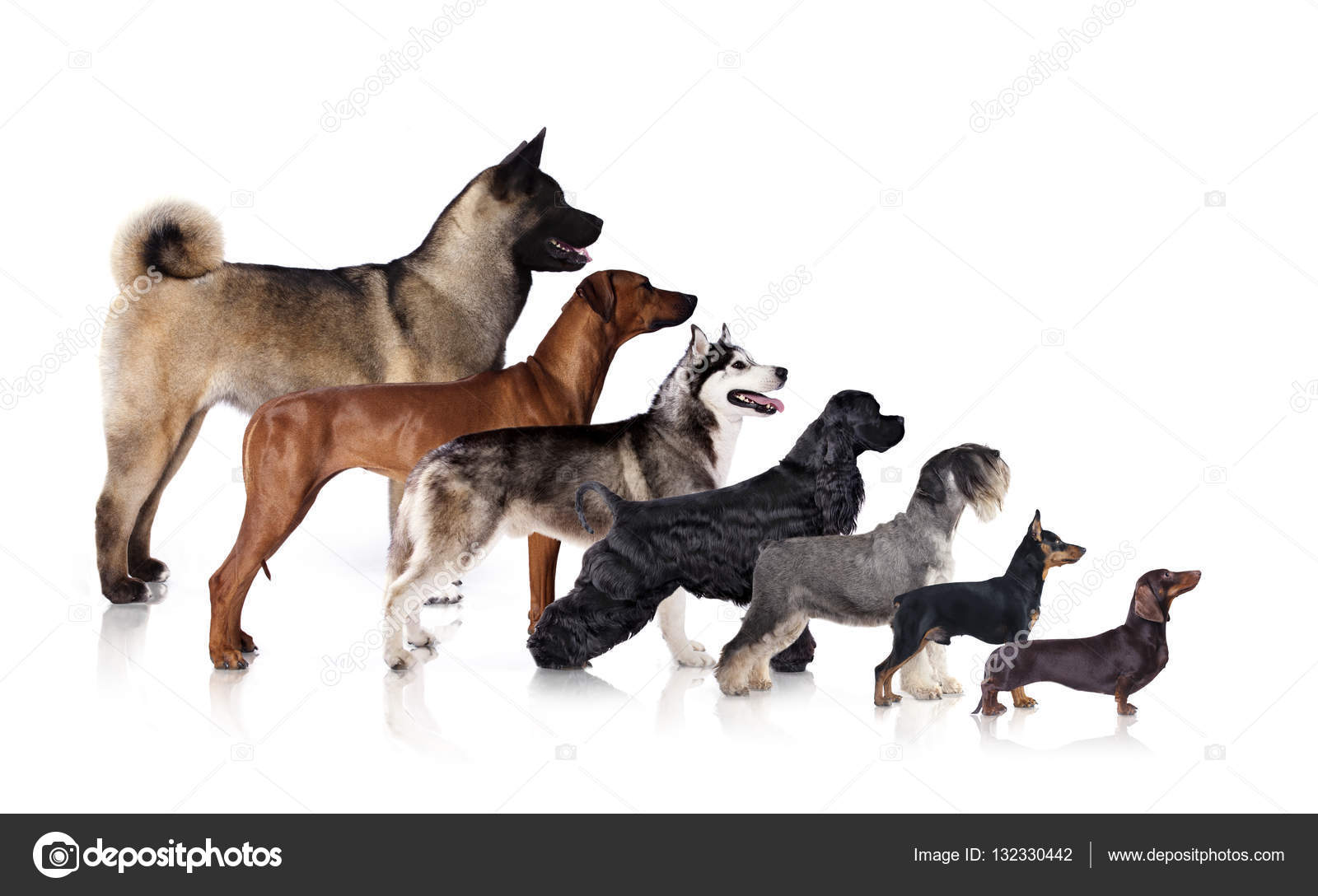Cats And Dogs Are Different Sp