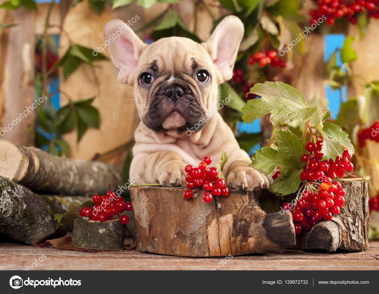 Bulldog e Bububu datazione