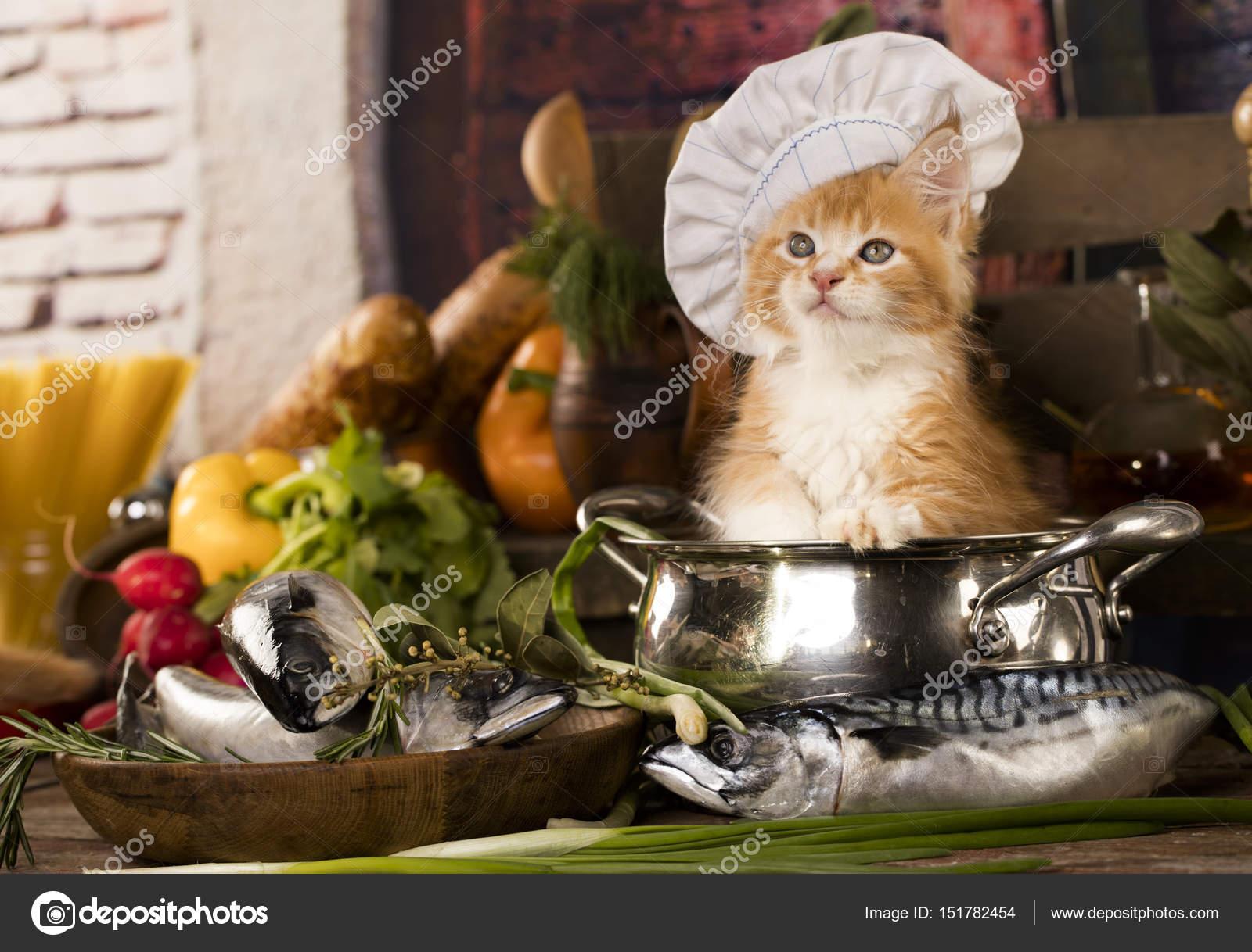 Kleine rote Kätzchen in der Küche spielen Fisch und Pfannen ...