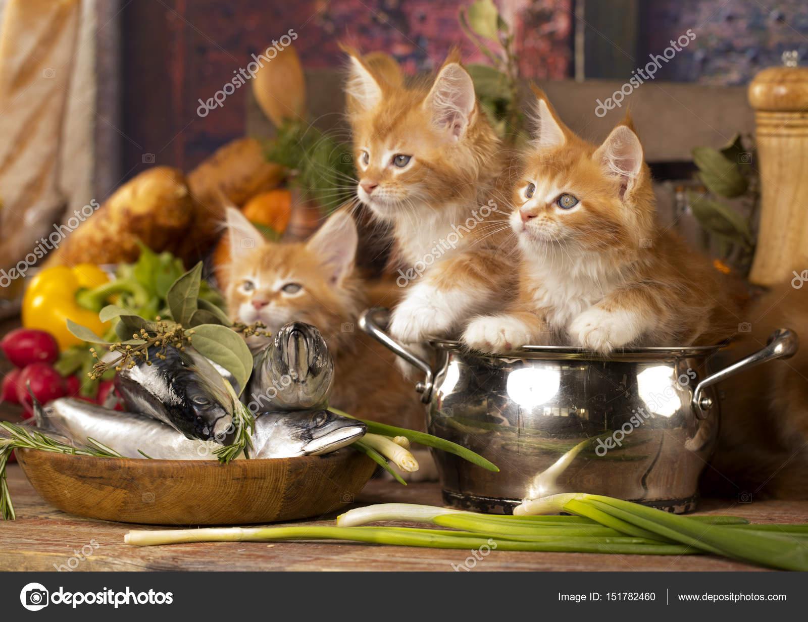 Kleine rote Kätzchen in der Küche spielen mit Fisch — Stockfoto ...