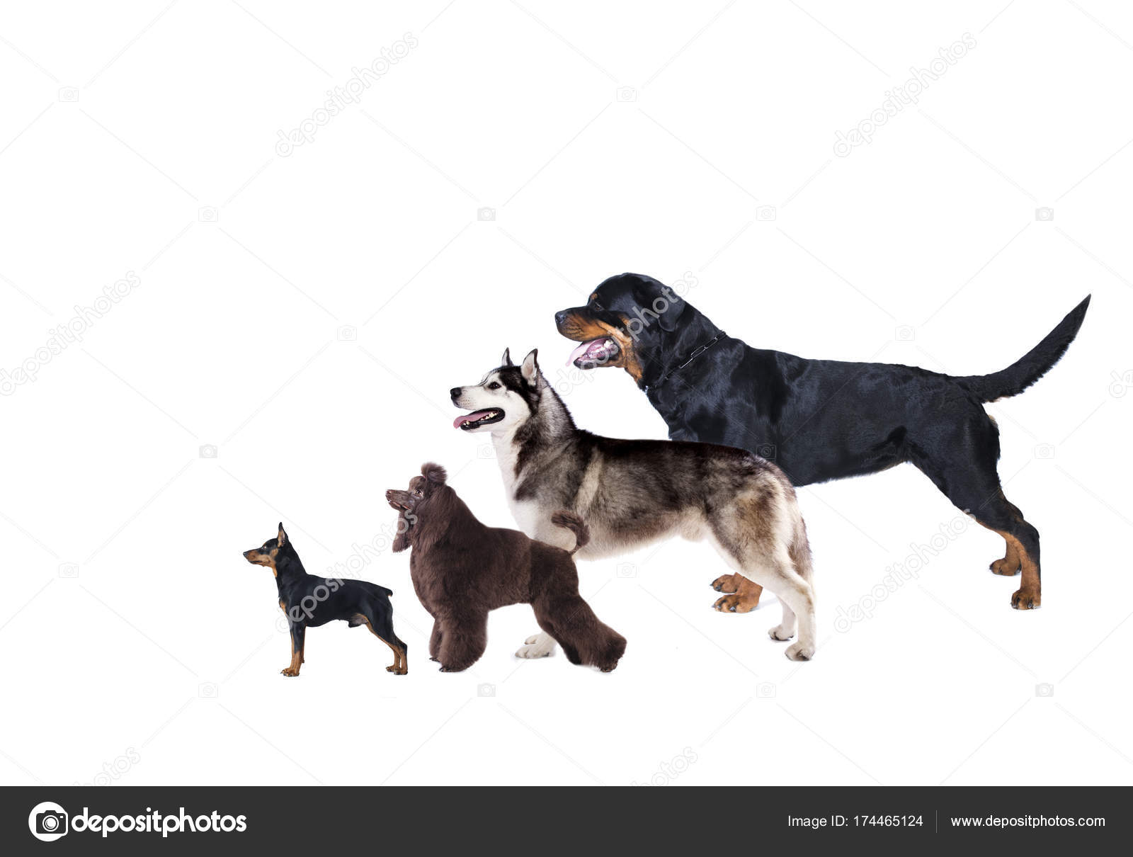 Perfil Del Grupo Perros Stand Exposición Perro — Foto de stock ...