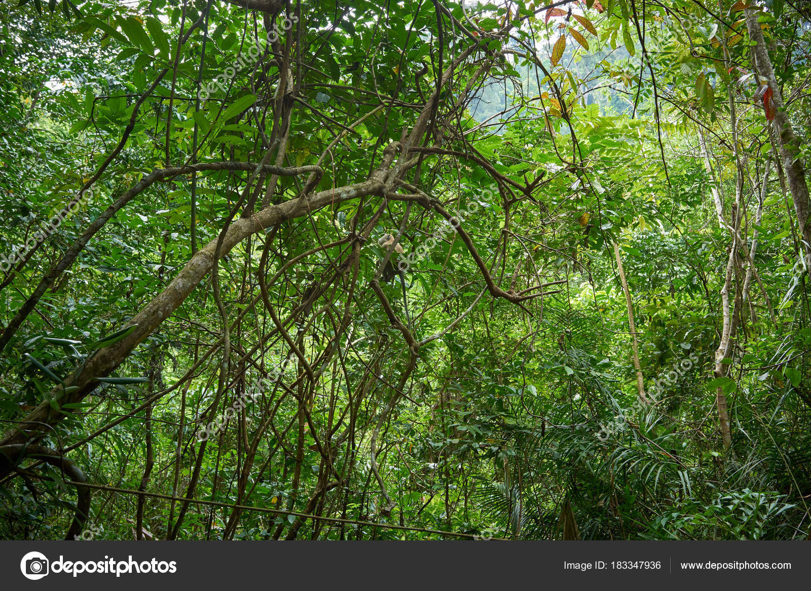 Beautiful Forest Background Nature Landscape Stock Photo